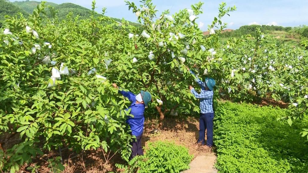 Cần tăng cường chuỗi liên kết tiêu thụ nông sản